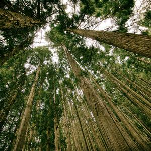 Vertu Signature S Design Black Pure