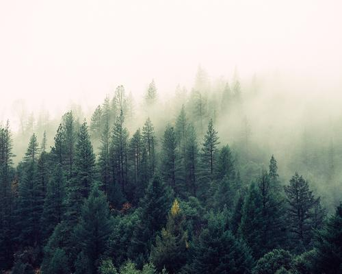 picture of a misty forest